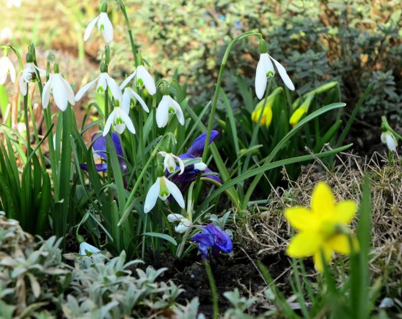 Frühlingserwachen im Hegge-Park