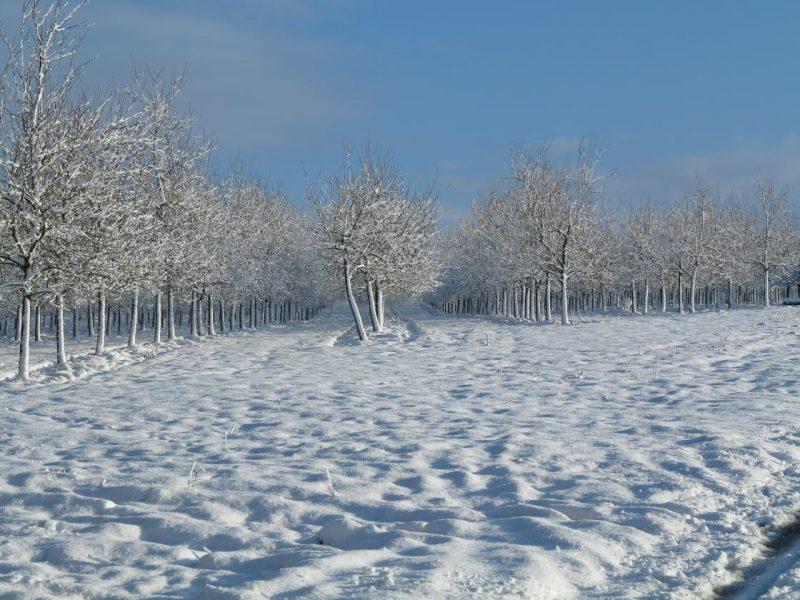 Herrlich Winterlandschaft