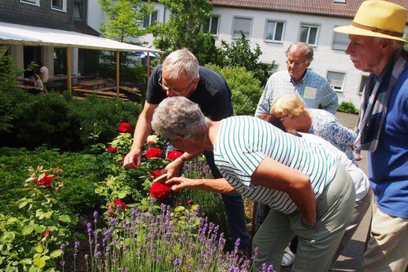 Blumen und Pflanzen erkunden