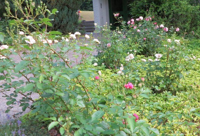 Der Hegge-Park in voller  Blüte