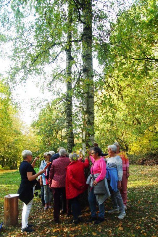 Der Baum: Ein meditativer Impuls