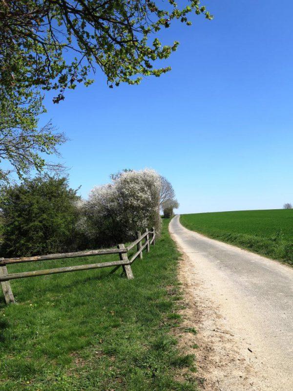 Die aufblühende Landschaft rund um die Hegge lädt zum Spaziergang ein